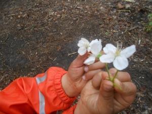 blossom Pollok